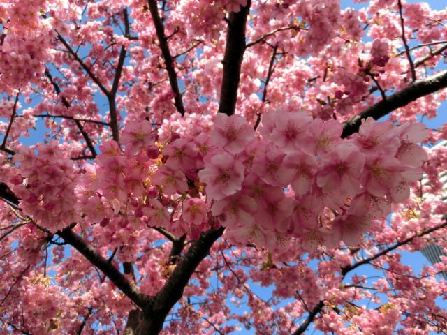 Cherry Blossom Everything