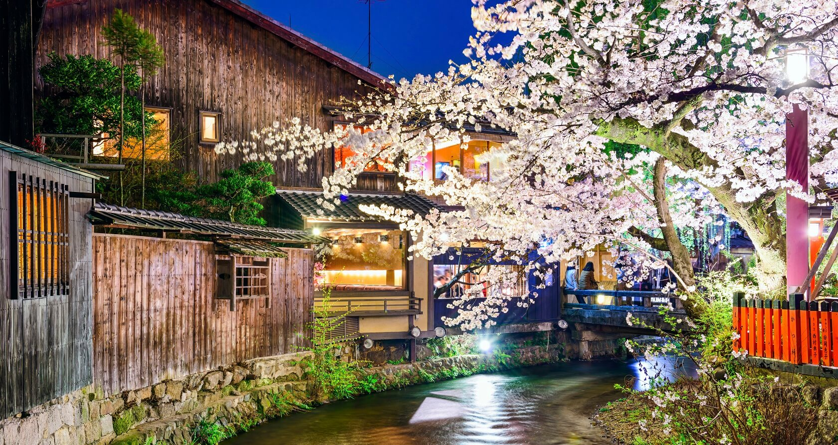 Sakura around the Geisha district