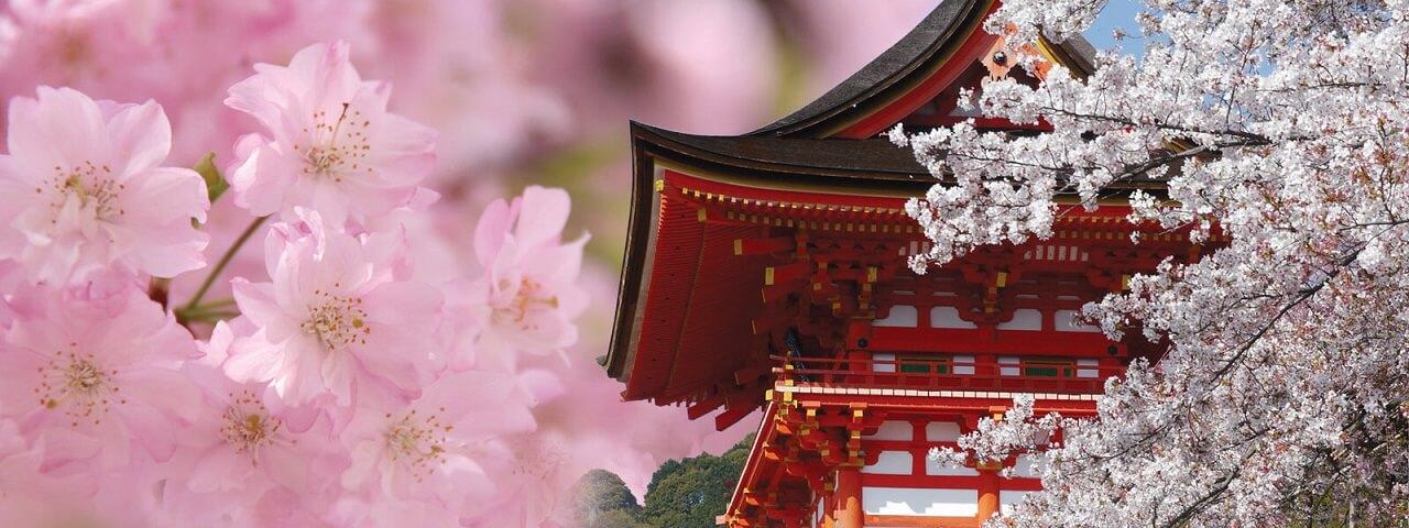 Sakura Japan Tours