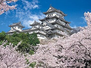 Photo of Himeji Castle with Japanese cherry blossom
