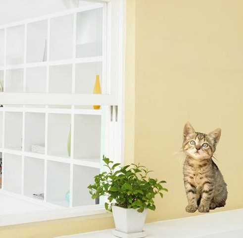 Wall-Art for the cat lover in you