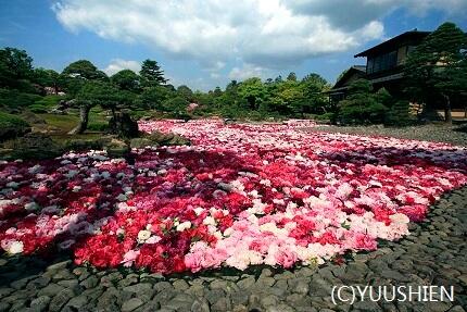 Japanese Peony Garden