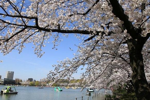 Japan's most popular park