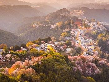 2.Japan Cherry Blossom Tour 7 Days<a name=sakura1></a>
