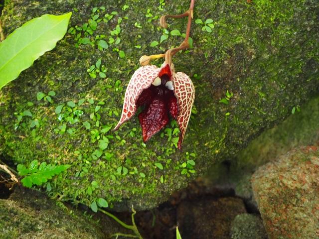 Travel Japan: Makino Botanical Garden!