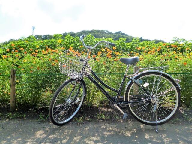 Travel Japan: Cycling