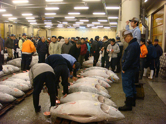 Tsukiji Fish Market & Tuna Auction