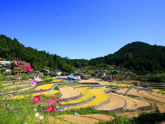 Travel Japan: Rice Paddies