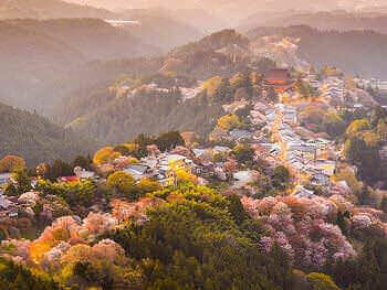2. Essence of Spring | Cherry Blossom Festival Tours 7 Days<a name=sakura1></a>