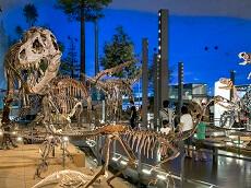 Fukui Dinosaur Museum