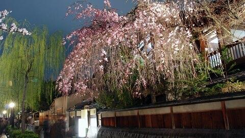 Essence of Spring Tour13 Days From $6980 | Mar - Apr Visit: Tokyo, Hakone, Mt.Fuji, Kyoto, Nara, Osaka, Hiroshima, Kumamoto, Takachiho, Dogo
