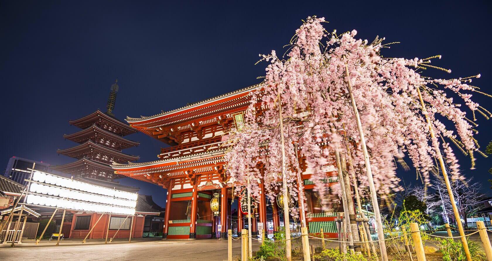 Asakusa Sensoji with Sakura
