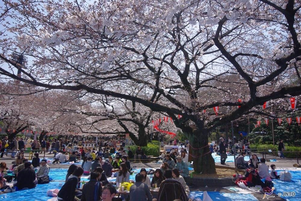 One of the Best Hanami Spots in Tokyo!