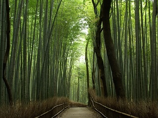 Photo of Arashiyama Bamboo Forrest