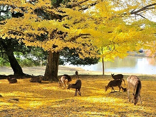 image of deer at Nara Deer Park