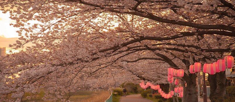 Essence of Spring | Hiroshima<span class=