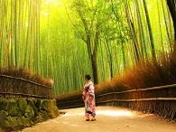 Image of Arashiyama Bamboo Forest and a woman in a kimono