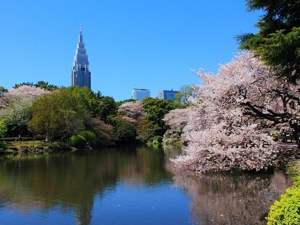 5. Shinjuku Gyoen Garden
