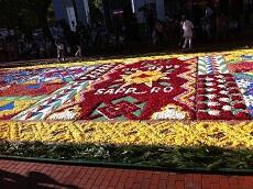 Sapporo Flower Carpet