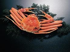 Matsuba Crab (JDT Recommends)