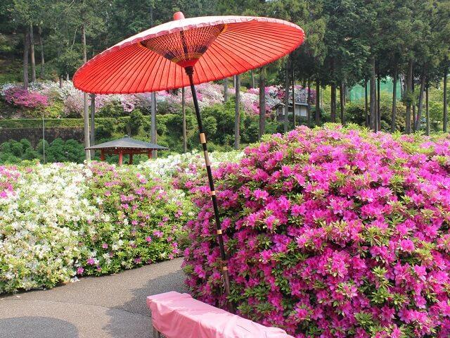 Tokyo's Hidden Shrine's Breathtaking Azalea Garden