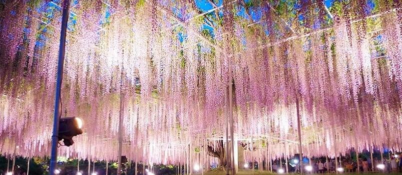 Spring Shibazakura Flower Tour