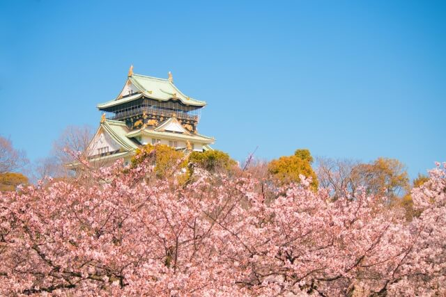 Perfect Spot for Cherry Blossom Tours & <em>Hanami</em>