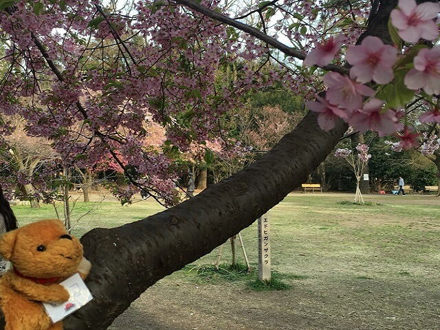 Taro's Japan Tour Adventures: Hanami is Here!