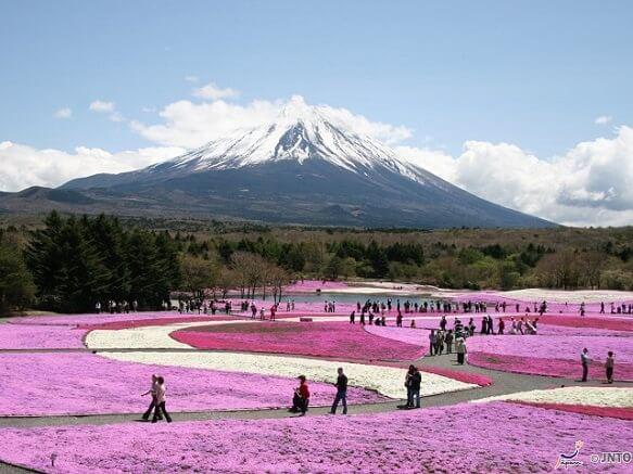 2019 Spring Flower Festival Tour!