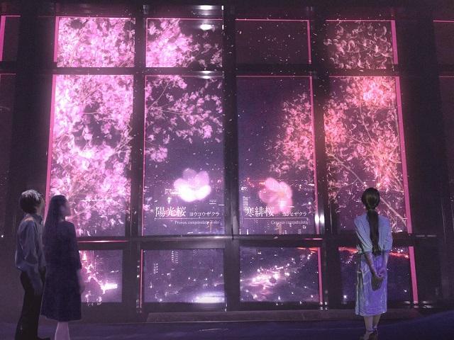 Tokyo Tower's 2019 Spring Yozakura Event