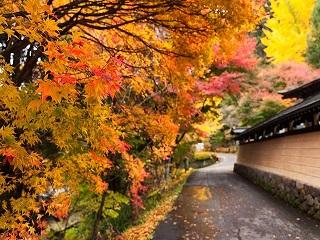 Image of fall leaves along Takayama's bridge