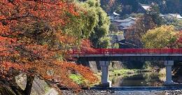 Takayama Fall Leaf View