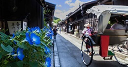 Old Town Takayama with Rickshaw and Japanese Flowers