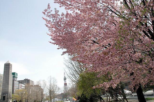Popular Cherry Blossom & Flower Spot