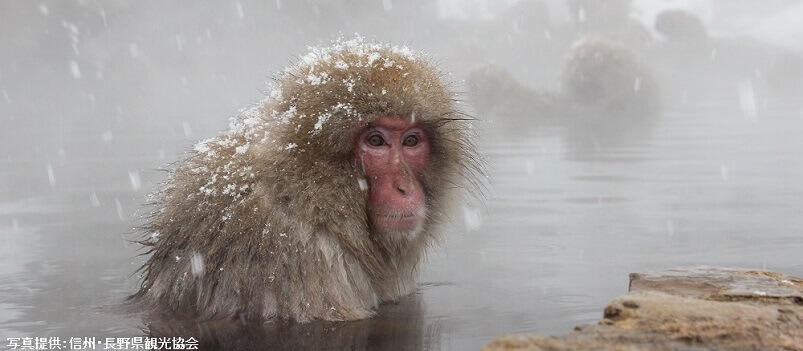 Winter Discovery | Snow Monkey & Anime