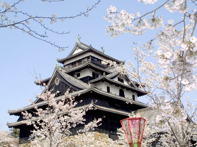 Perfect to View Cherry Blossoms & Japanese Flowers