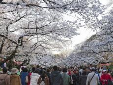 Ueno Park (Optional)