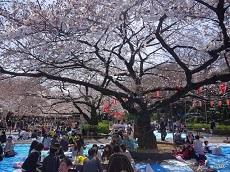 Ueno Cherry Blossom Festival