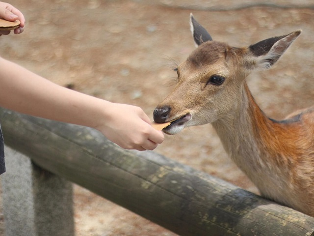 Oh Deer, a Price Increase in Nara