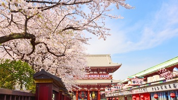 Essence of Spring with Sumo Tour
