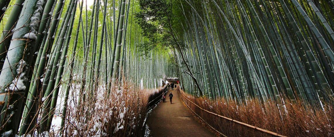 Grand Tour of Japan 2020
