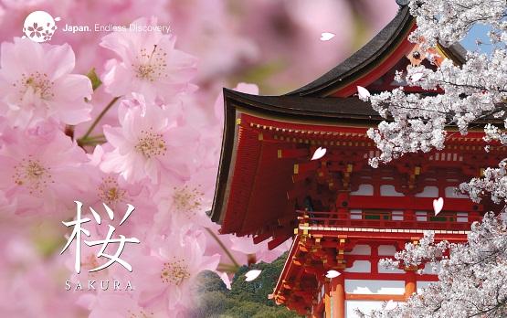 Sakura Cherry Blossoms In Japan Japan City Tour