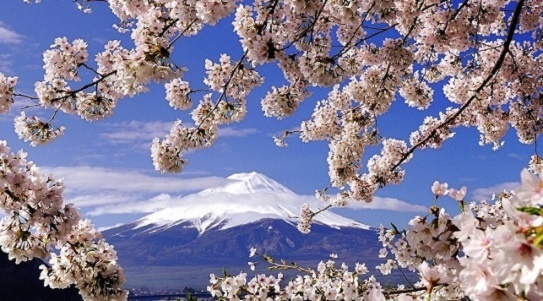 Essence of Spring | Japan Cherry Blossom Tours 2020