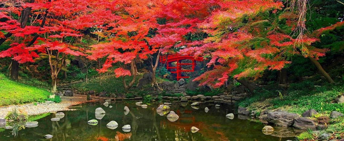Autumn Japan Tours 2020