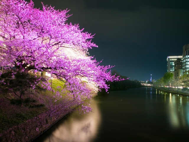 Gorgeous Japanese Flowers & Cherry Blossoms
