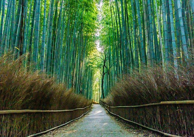 Falling in Love with: Arashiyama