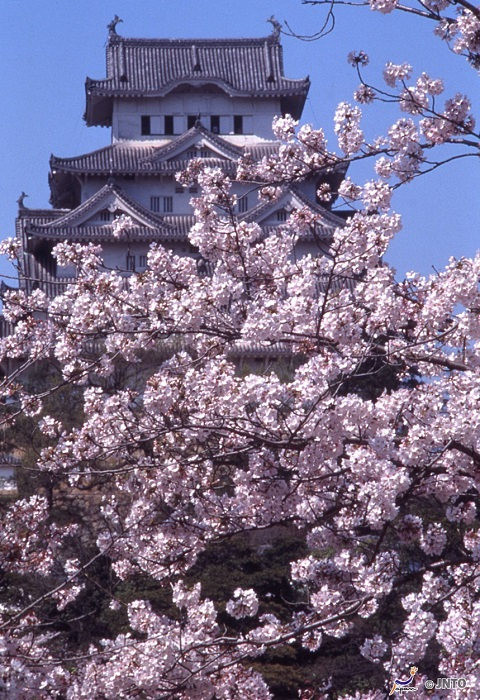 Cherry Blossoms atop the Castle