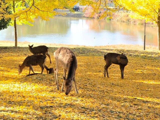 Playful Deer near Todaiji