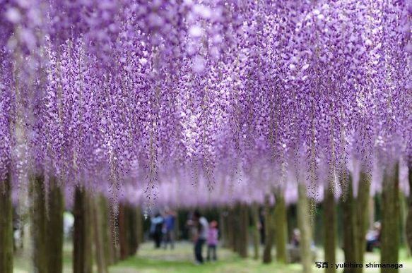 Beautiful Roof of Japanese Flowers