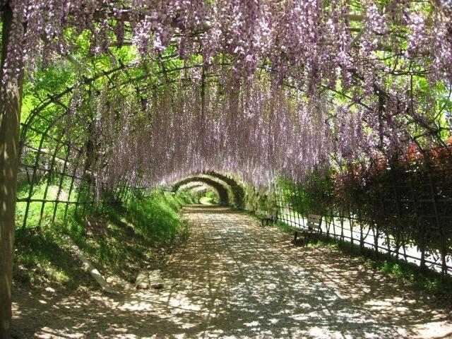 Kawachi Wisteria Garden & Hiroshima | Spring Japan Tours